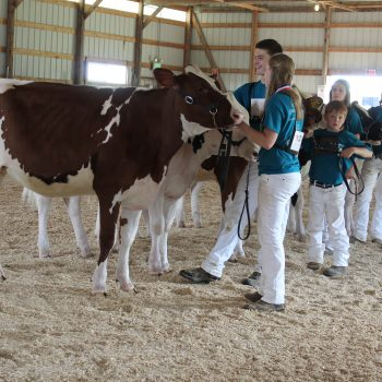 2018 Minnesota Junior Holstein State Show Results