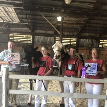 District 7 Holstein Show Results (Anoka, MN)