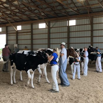 District 6 Holstein Show Results (Cannon Falls, MN)