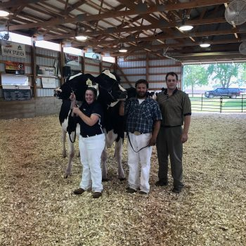 District 4 Holstein Show (Pipestone, MN)